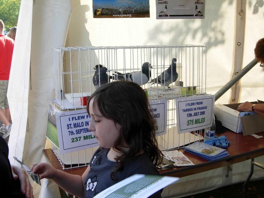 pigeons11_1024