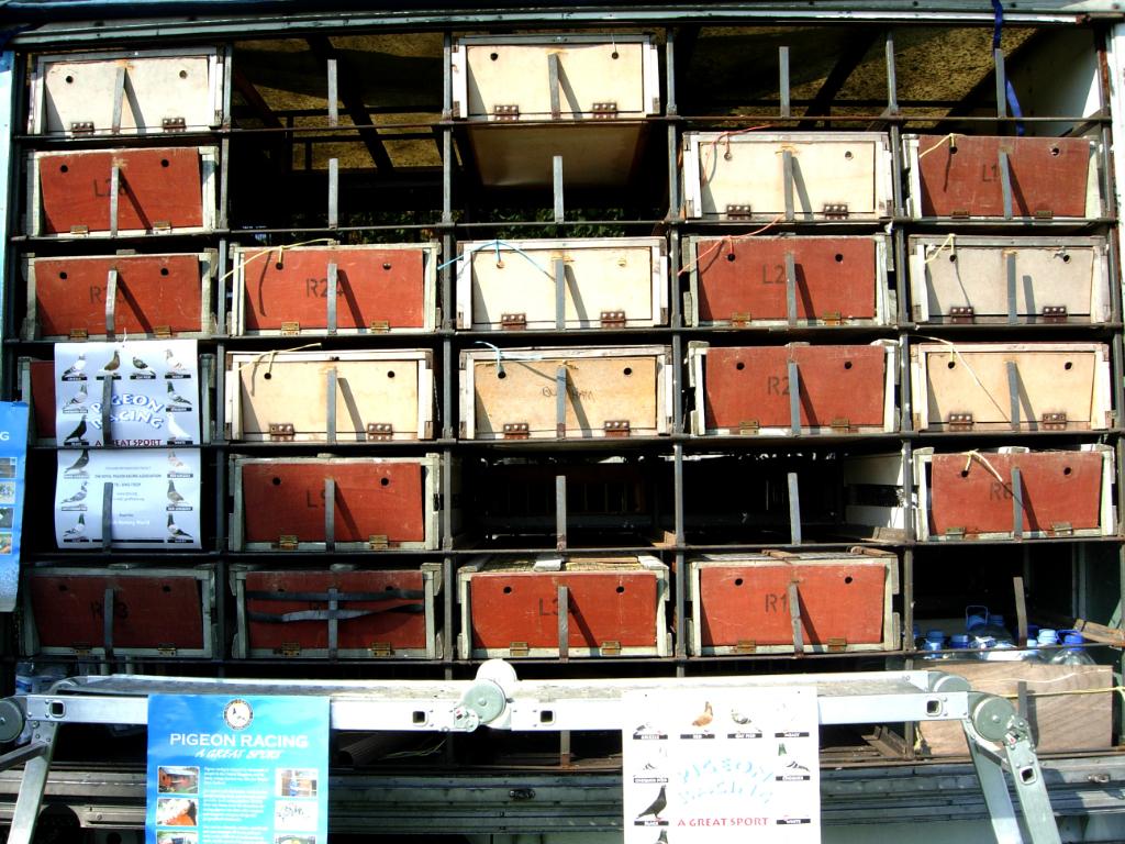 pigeons4_1024
